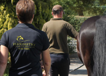 Fleximetry staff walking with horses