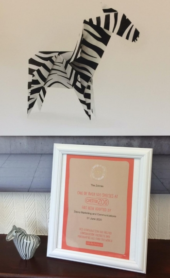 We are 10! Celebrating 10 years of Zebra