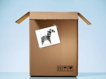 Zebra's migration!